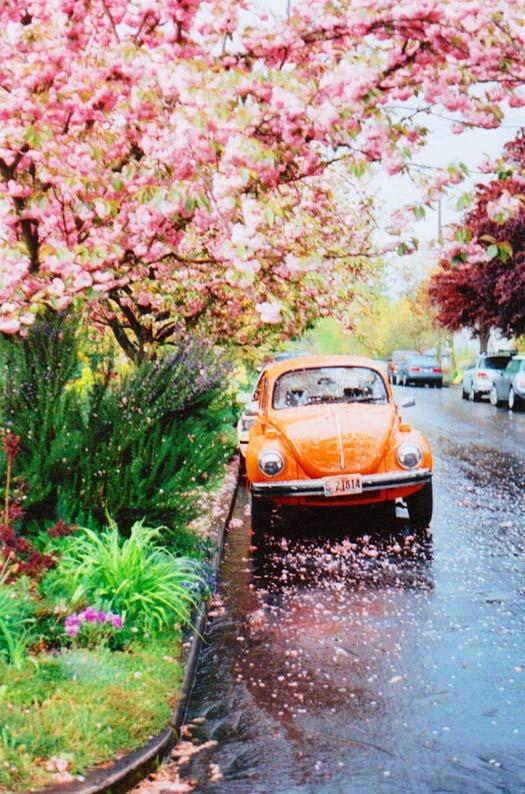 Lindsay's Vintage VW